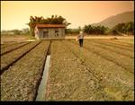Hut & Farmland