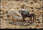 crab_20190519_01s