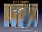 20180114 小白鷺