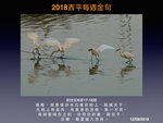 20180812 小白鷺