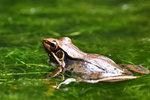 沼蛙 DSC_1884_1