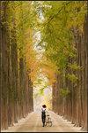 秋風吹起 思憶遍地 Autumn wind