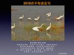 20180211 大白鷺