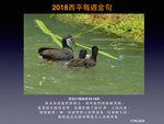 20180617 白胸苦惡鳥